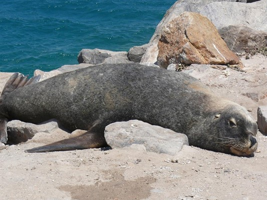 General - Seal on rocks
